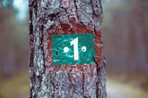 a tree with a sign attached displaying the number 1