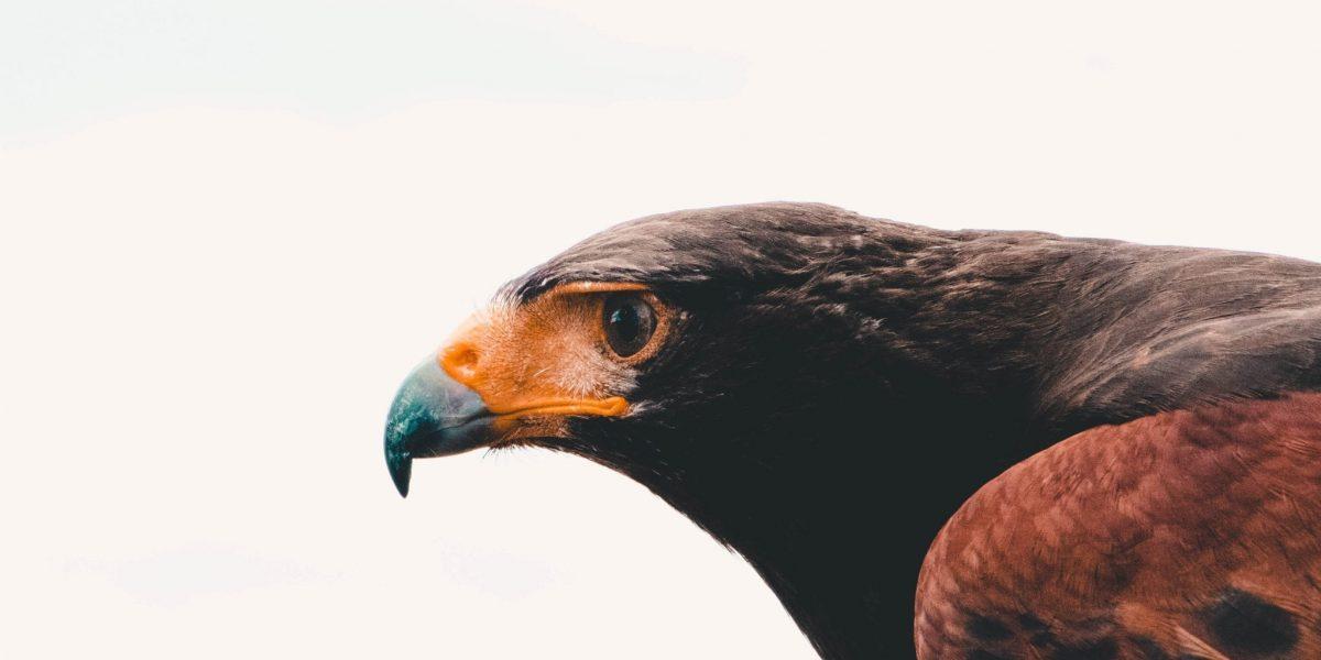 a high focus photo of a bird representing productive habits